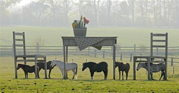 horseshelter